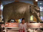 國立史前文化博物館 :DSCF0560.JPG