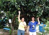 20090914-大溪Tina廚房&愛情故事館:滿園的成熟水果