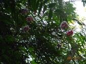 2014/08/17白石山艷紅鹿子百合:DSC03364.JPG