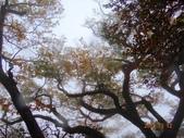 2013/10/12風雨無阻 賞山毛櫸 北插天山 :DSC05167.JPG
