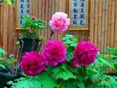 龍潭山岳協會杉林溪會慶2013/03/24:DSC08723.JPG