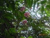 2014/08/17白石山艷紅鹿子百合:DSC03366.JPG