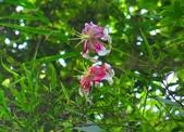 2014/08/17白石山艷紅鹿子百合:DSC03351.JPG