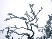 2012/12/31歲末上 北插天山 賞霧淞:DSC00841.JPG