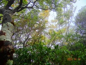 2013/10/12風雨無阻 賞山毛櫸 北插天山 :DSC05163.JPG