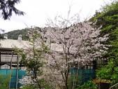 龍潭山岳協會杉林溪會慶2013/03/24:DSC08927.JPG