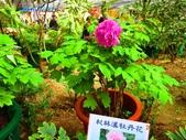龍潭山岳協會杉林溪會慶2013/03/24:DSC08687.JPG