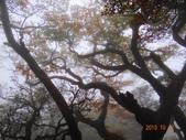 2013/10/12風雨無阻 賞山毛櫸 北插天山 :DSC05166.JPG