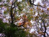 2013/10/12風雨無阻 賞山毛櫸 北插天山 :DSC05170.JPG