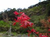 龍潭山岳協會杉林溪會慶2013/03/24:DSC08793.JPG