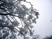 2012/12/31歲末上 北插天山 賞霧淞:DSC00846.JPG