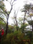 2013/10/12風雨無阻 賞山毛櫸 北插天山 :DSC05172.JPG