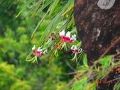 2014/08/17白石山艷紅鹿子百合:DSC03340.JPG