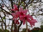 2014/03/19竹林山 觀音寺:DSC08771.JPG