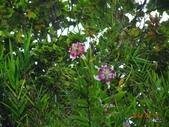 2014/08/17白石山艷紅鹿子百合:DSC03361.JPG
