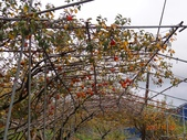 天鑾池+武法奈尾山2013/11/09..11/10:DSC05579.JPG