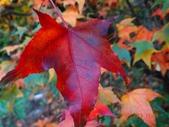 天鑾池+武法奈尾山2013/11/09..11/10:DSC05614.JPG