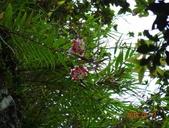 2014/08/17白石山艷紅鹿子百合:DSC03362.JPG