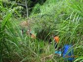 再訪 水漾森林 凋亡之美 2013/09/07/08....2天:DSC04375.JPG
