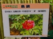 龍潭山岳協會杉林溪會慶2013/03/24:DSC08716.JPG