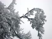 2012/12/31歲末上 北插天山 賞霧淞:DSC00830.JPG