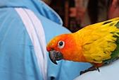 99.5.2鹿港-玻璃館-王功:這隻鳥還在主人身上大便~好糗喔