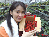 台中美食之旅~真北平涮羊肉&小義大利餐廳(美館店)&採草莓:很大一間室內的草莓園...jpg