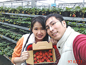 台中美食之旅~真北平涮羊肉&小義大利餐廳(美館店)&採草莓:滿滿的草莓現在一斤是二百元喔.jpg
