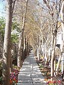 新社千樺咖啡&南投歐莉葉荷&日月潭&斗六摩爾花園&小義大利:不知道是什麼樹都枯掉了..但這樣一整排看過去也是另一種