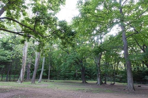 DSC01768.jpg - 北海道自由行第二天(定山溪.豐平峽水庫)