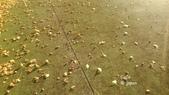 日本東京昭和公園~銀杏並木大道:085.jpg