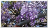 紫藤花~一日遊景點:DSC_0180.jpg