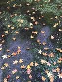 京都 永觀堂/福林寺 楓紅層層:IMG_0021.JPG