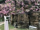 2020士林官邸鬱金香花展「鬱見你真好」:IMG_1433.JPG