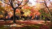 日本京都東福寺賞楓2016:DSC_2423.jpg