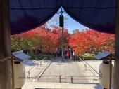京都 永觀堂/福林寺 楓紅層層:IMG_0074.JPG