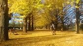 日本東京昭和公園~銀杏並木大道:081.jpg