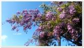 紫藤花~一日遊景點:DSC_0215.jpg