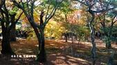 日本京都東福寺賞楓2016:DSC_2460.jpg