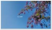 紫藤花~一日遊景點:DSC_0217.jpg