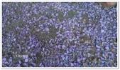 紫藤花~一日遊景點:DSC_0209.jpg