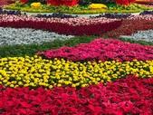 中正紀念堂樂活玩花創意無限花毯展示:122588654_3591997790863810_8081631561774264729_n.jpg