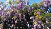 紫藤花~一日遊景點:DSC_0207.jpg