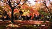 日本京都東福寺賞楓2016:DSC_2427.jpg