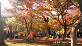 日本京都東福寺賞楓2016:DSC_2425.jpg
