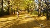 日本東京昭和公園~銀杏並木大道:040.jpg