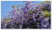 紫藤花~一日遊景點:DSC_0187.jpg