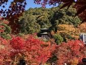 京都 永觀堂/福林寺 楓紅層層:IMG_0137.JPG