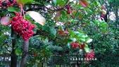 日本澄清庭園之我的旅遊足跡:DSC_2181.jpg