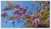 紫藤花~一日遊景點:DSC_0219.jpg